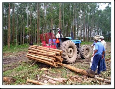 Reforestacion de arboles en mexico
